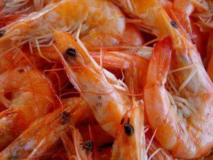 Pomen posameznih omega-3 maščobnih kislin